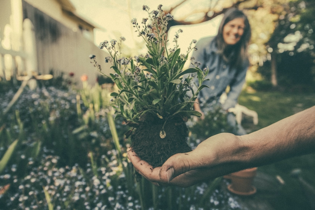 KAN themagroep: 'Bewoners verleiden tot natuurinclusieve tuinen'