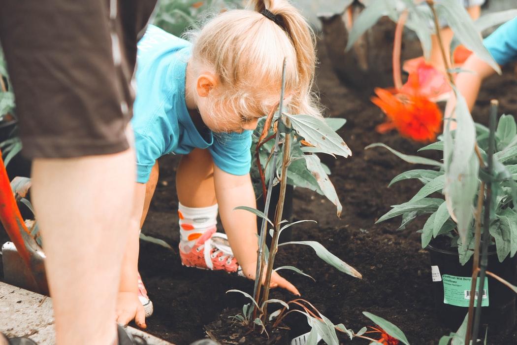 Van tegels naar planten: hoe verleiden we bewoners?